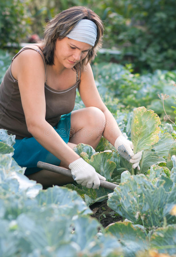Woman works in garden royalty free stock photos