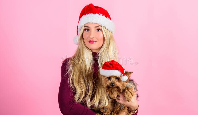 Woman and yorkshire terrier wear santa hat. Celebrate christmas with pets. Reason love christmas with pets. Ways to have. Merry christmas with pets. Girl royalty free stock photos