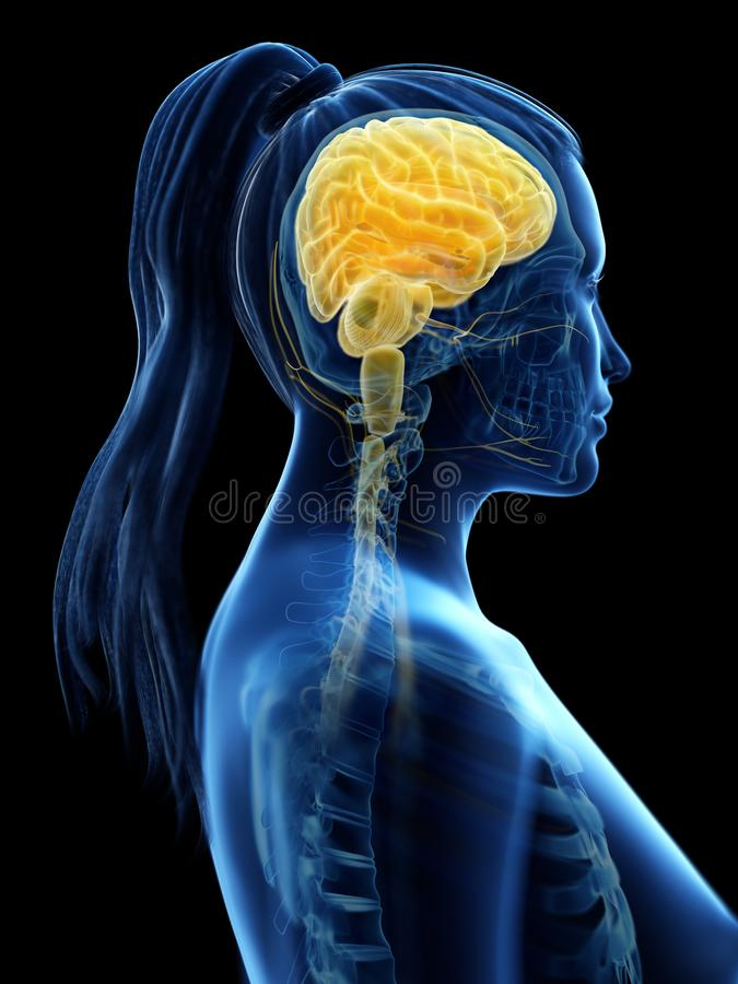 A womans brain royalty free illustration