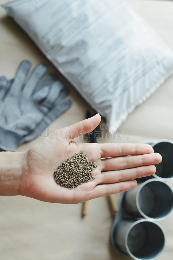 Womans hand holds seed. Top view stock photo image stock image