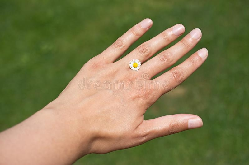 Womans´s hand with small daisy instead of ring on blured green bakground. Wedding to nature.  royalty free stock images
