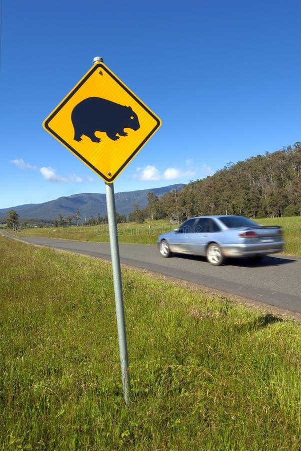 Wombats Überfahrtzeichen und Schnellfahrenauto. stockfoto