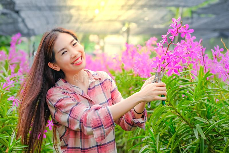 Women Asian cutting pink orchids in the garden for sale With happy smile stock photos
