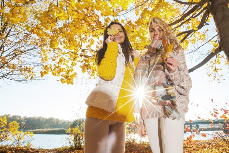 Women in autumn park stock images