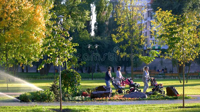 Women with baby carriages are walking in the park. stock photography