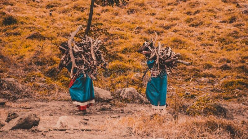 Women carrying firewood stock photo