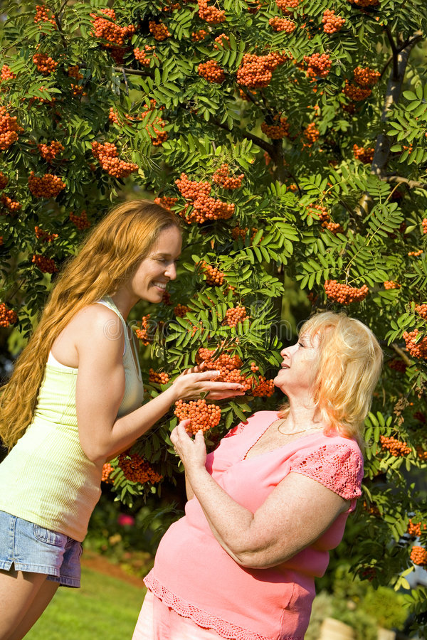 Women and fall. Family mother and daughter outdoor admiring ashberry tree royalty free stock images