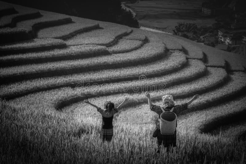 Women farmer and daughter raising armม on Rice fields terrace royalty free stock image
