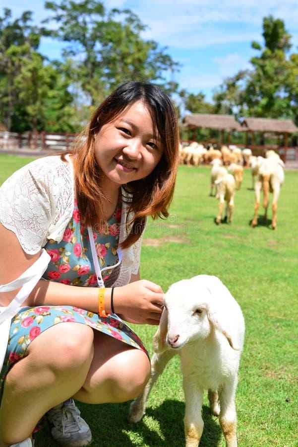 Women feeding sheep stock photography