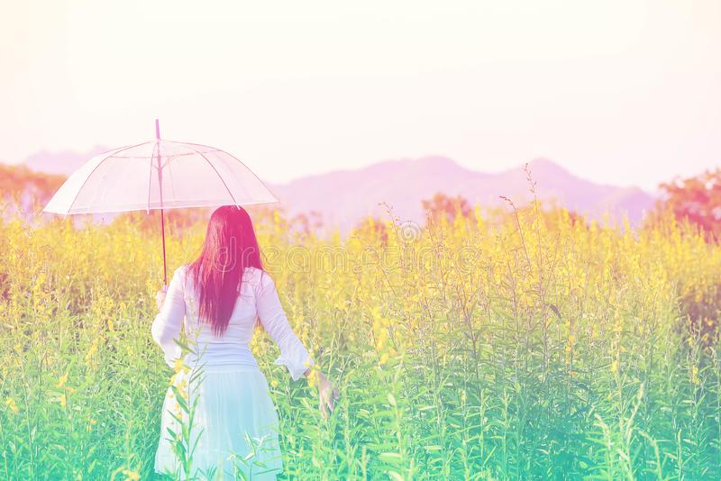 Women feeling free walking to the yellow meadow. stock images