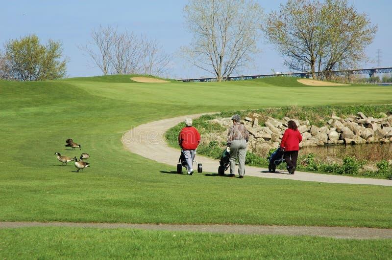 Women Golfing royalty free stock photos