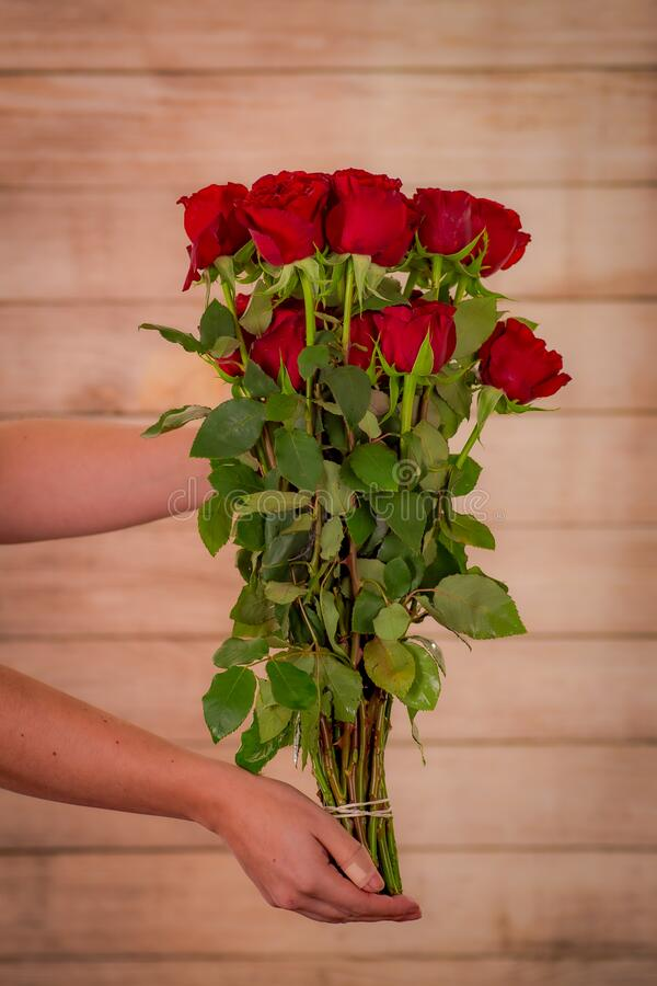 Women hand holding a bouquet of Hearts Garden roses variety, studio shot, red flowers royalty free stock photos