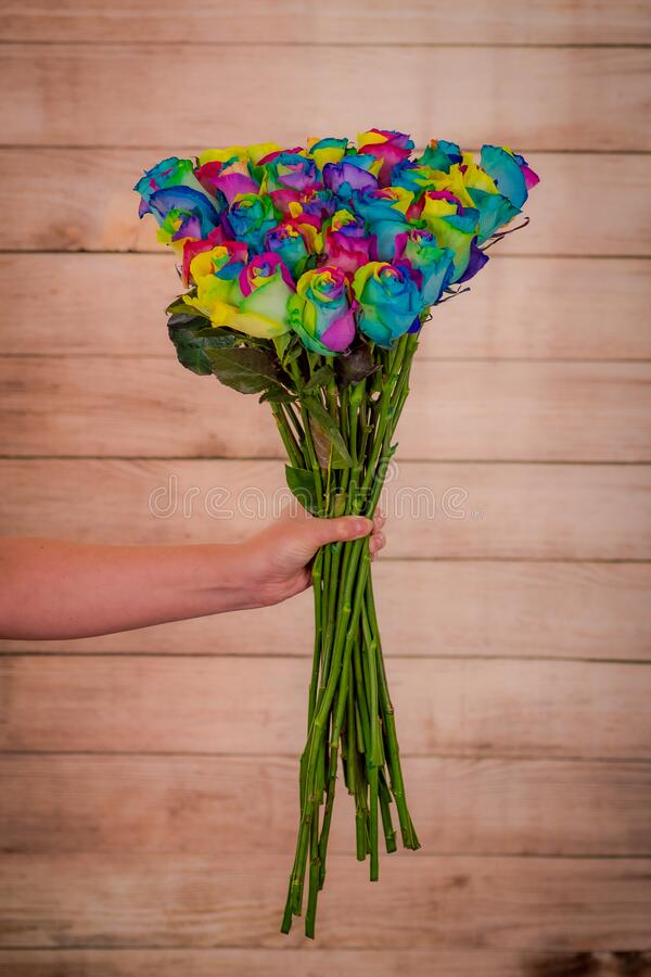 Women hand holding a bouquet of Tinted Rainbow roses variety, studio shot, multicolored flowers stock photos