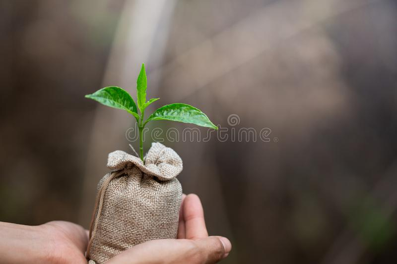 Women hand holding growing seedlings in fertile soil bags, Planting trees to reduce global warming, environment Earth Day, Forest royalty free stock photos