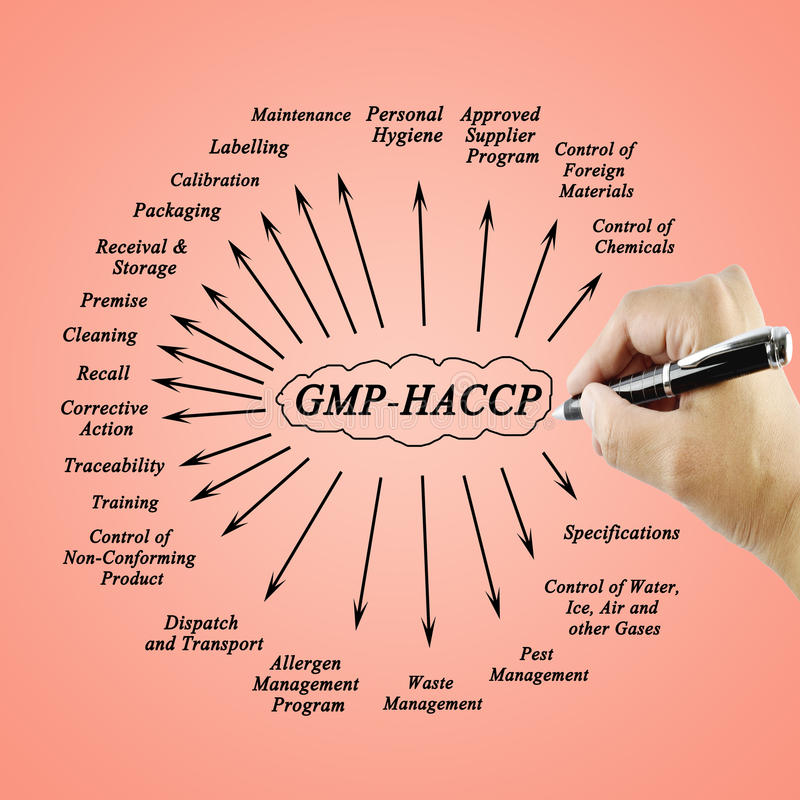 Women hand writing element GMP-HACCP for use in manufacturing stock photography