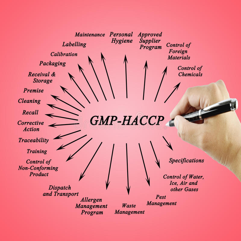 Women hand writing element GMP-HACCP for use in manufacturing royalty free stock photography