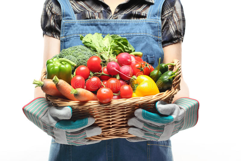 Women hands holding a basket full of vegetables. On white background royalty free stock image