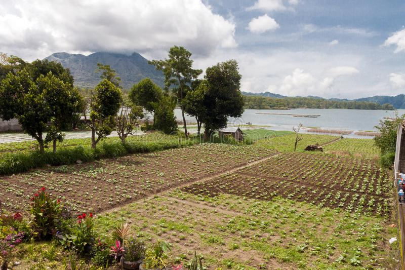 Women harvesting green on Lake Batur. Bali royalty free stock photos
