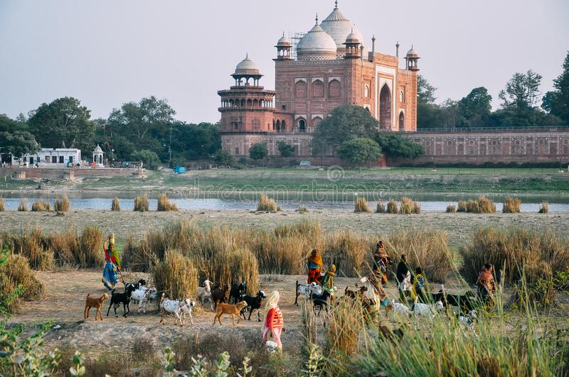 Women and goats walk by the Yamuna River behind the Taj Mahal, India. royalty free stock images