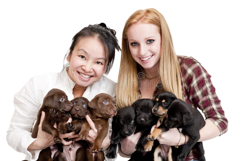 Women holding puppies royalty free stock photography
