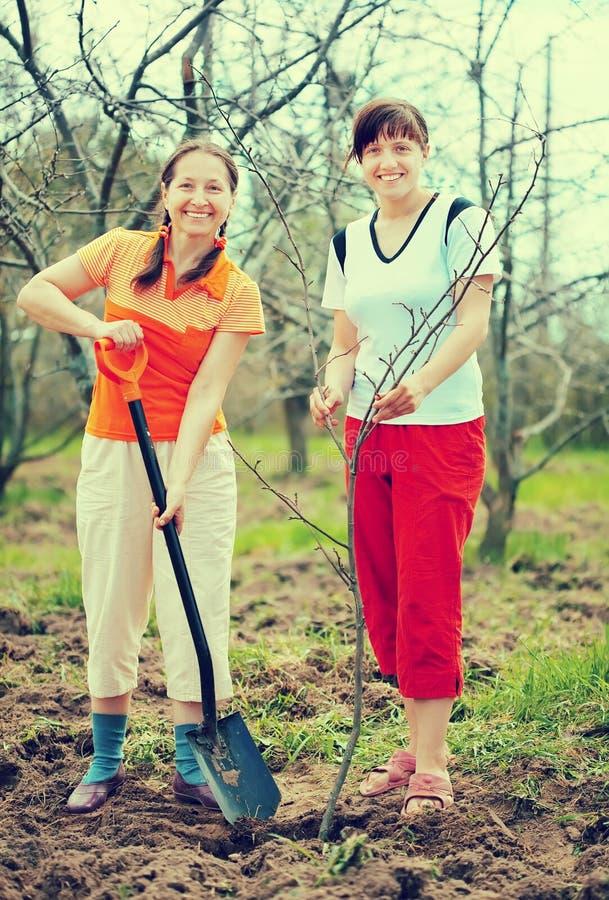 Women planting tree at orchard. Happy women planting fruit tree at orchard in spring stock image