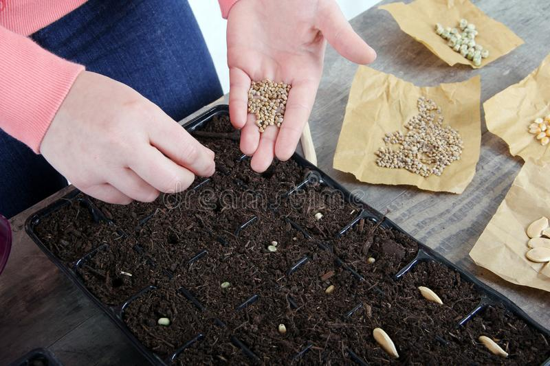 Women planting vegetable seeds close up stock photography