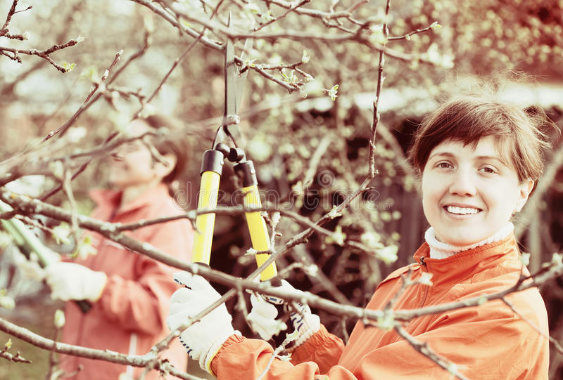 Women pruned branches in the orchard. Two women pruned branches in the orchard in spring stock photography