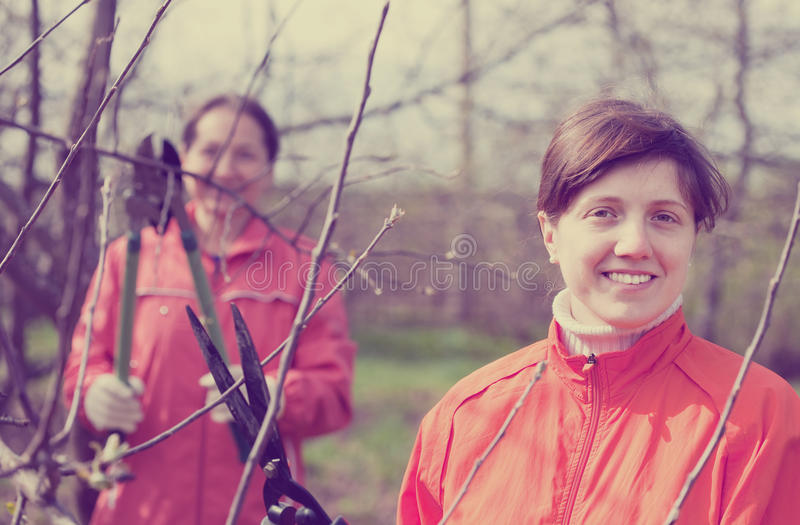 Women pruning fruits tree in orchard. Two women pruning fruits tree in the orchard royalty free stock image
