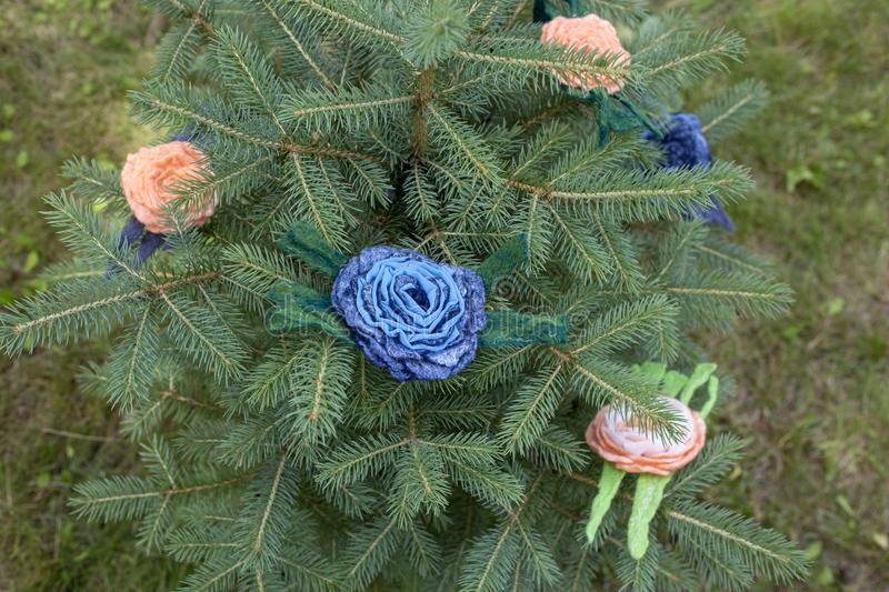 Women`s brooch of fulled wool on branches of green spruce. royalty free stock photo