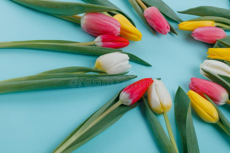 Spring tulips frame on background, top view. royalty free stock photography