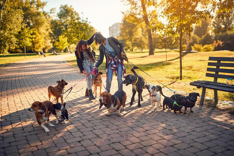 Women`s enjoying with dogs while walking outdoors. Happy women`s enjoying with dogs while walking outdoors stock image