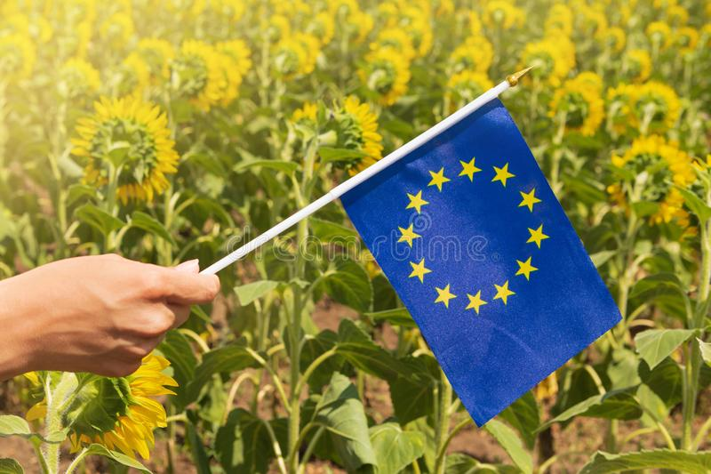 In the women`s hand a small blue flag of the European Union, against the background of blooming sunflower, the concept of. Friendship and joint activity, close stock image