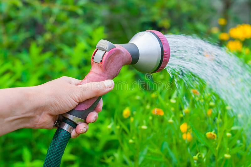 Women`s hand with a sprinkler watering a yellow flowers in the garden stock photos