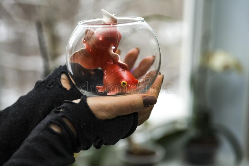 Women`s hands hold a small round aquarium with a goldfish inside. In the background there is a blurred window image. Copy space.  stock photography