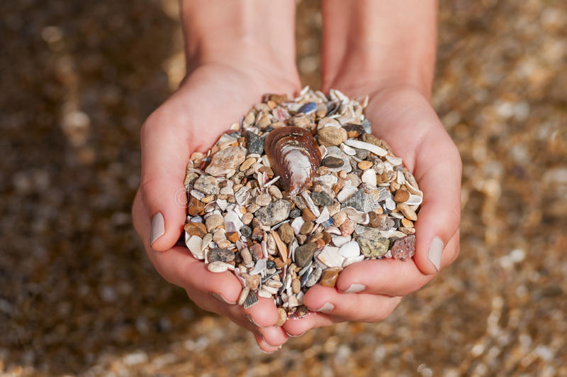 Women's hands holding seashells and stones stock image