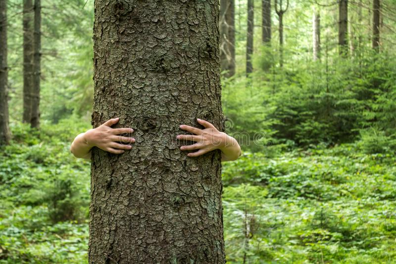 Women`s hands hugging a tree. Love of nature. royalty free stock image