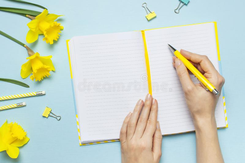 Women`s hands, open blank notebook, pen, clips, spring flowers daffodils narcissus on blue background. Female desktop, Office des stock photos