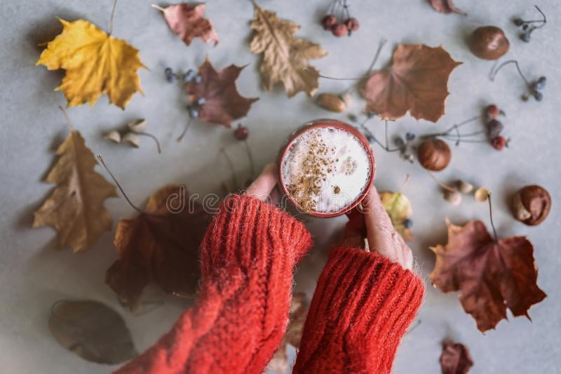 Women`s hands in a red wool pullover holding a cup of coffee with milk, cappuccino and cinnamon among autumn colorful royalty free stock images
