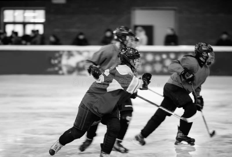 Women`s ice hockey. Women`s hockey team in motion play on ice royalty free stock photos