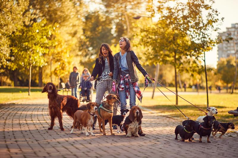 Women`s walker enjoying with dogs while walking outdoors. Professional women`s walker enjoying with dogs while walking outdoors royalty free stock images
