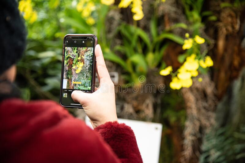 Women taking picture of flowers on her phone royalty free stock photos