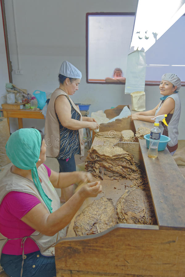Women working in a cigar factory. Tarapoto, San Martin, Peru stock photo