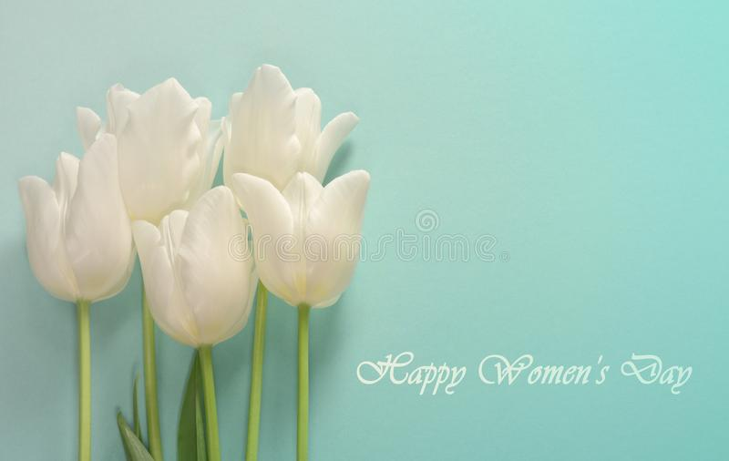 Womens day card. White tulips on a light turquoise background. Closeup stock photo