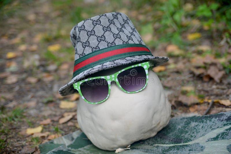 Wonder-mushroom with hat royalty free stock image