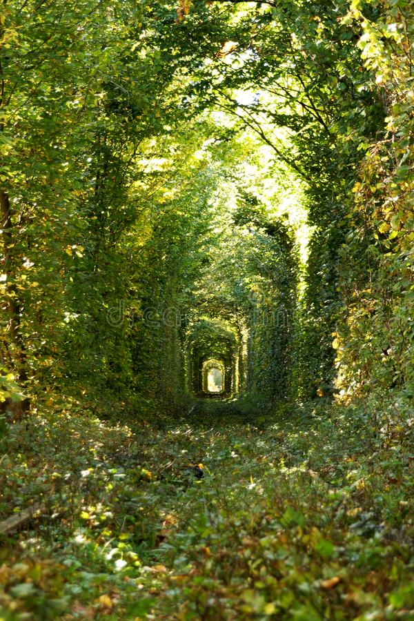 Wonder of Nature - Real Tunnel of Love, green trees and the railroad, Ukraine stock photography