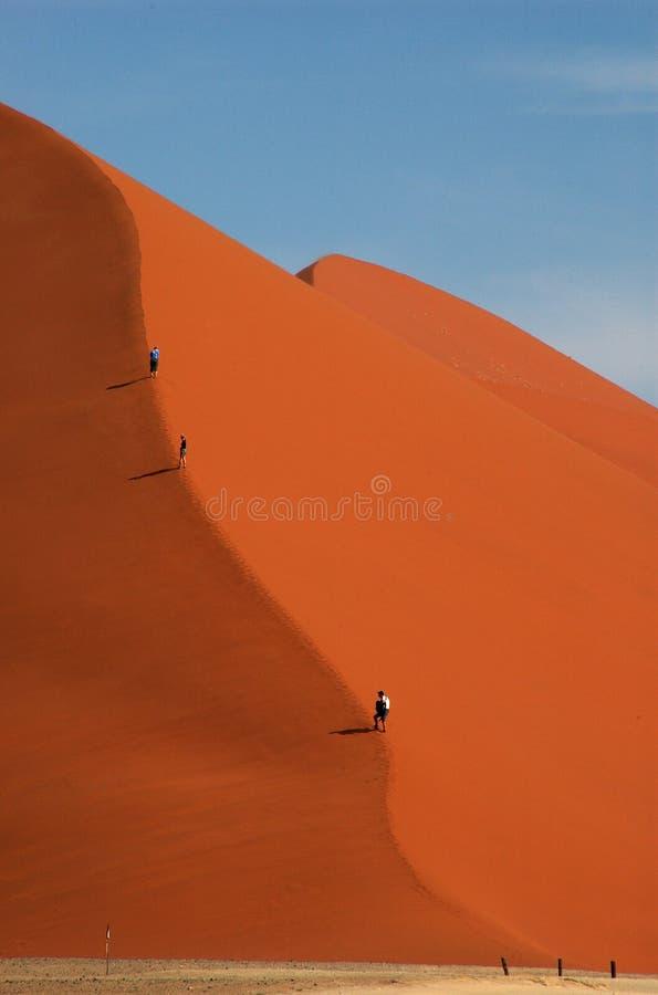 Wonderer on dune 45 stock image