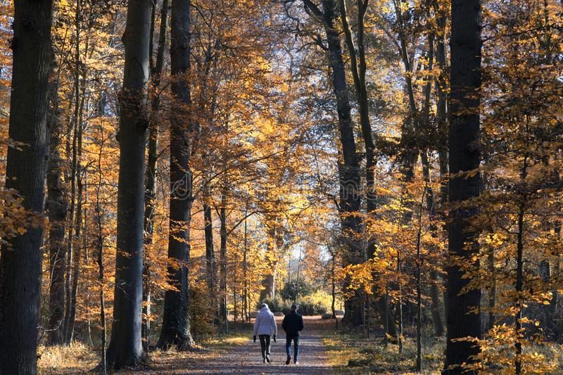 A wonderful autumn forest landscape in the Netherlands near the city of Utrecht royalty free stock photography