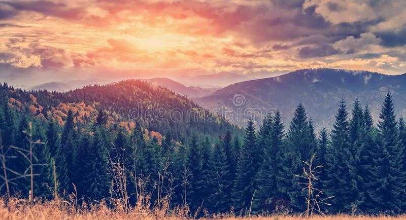Wonderful autumn landscape. majestic, overcast clouds in sunlight. spruce forest on mountain hillside in fog on sunset. retro royalty free stock photos