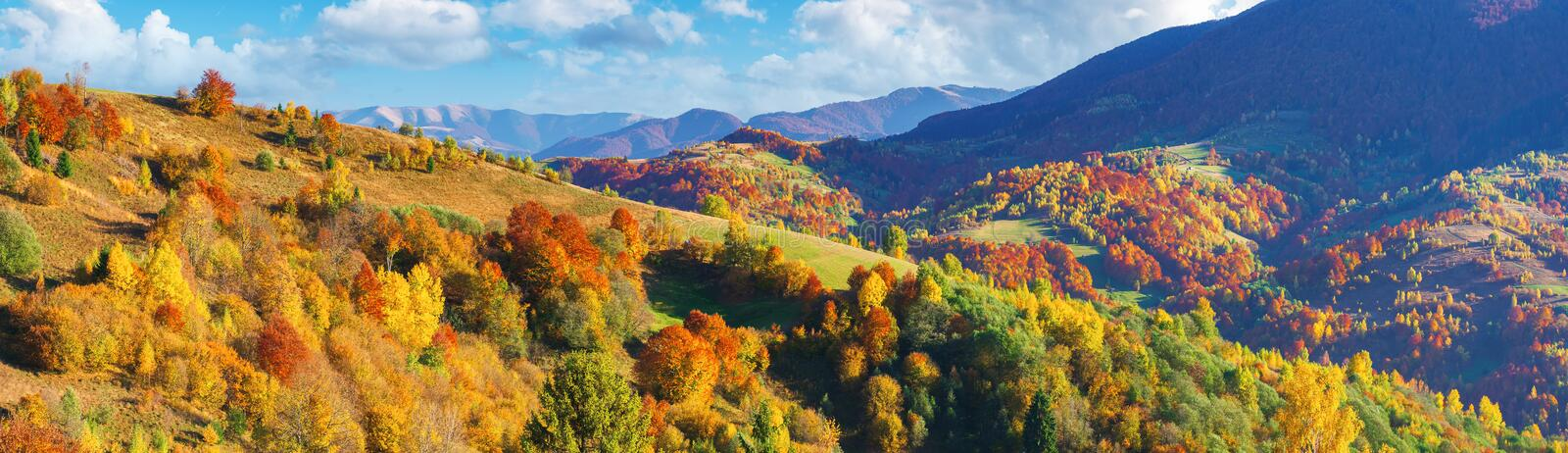 Wonderful autumn scenery in mountains. Wonderful autumn panorama in mountains. trees in fall colorful foliage on the hill. clouds on the blue sky above the stock image