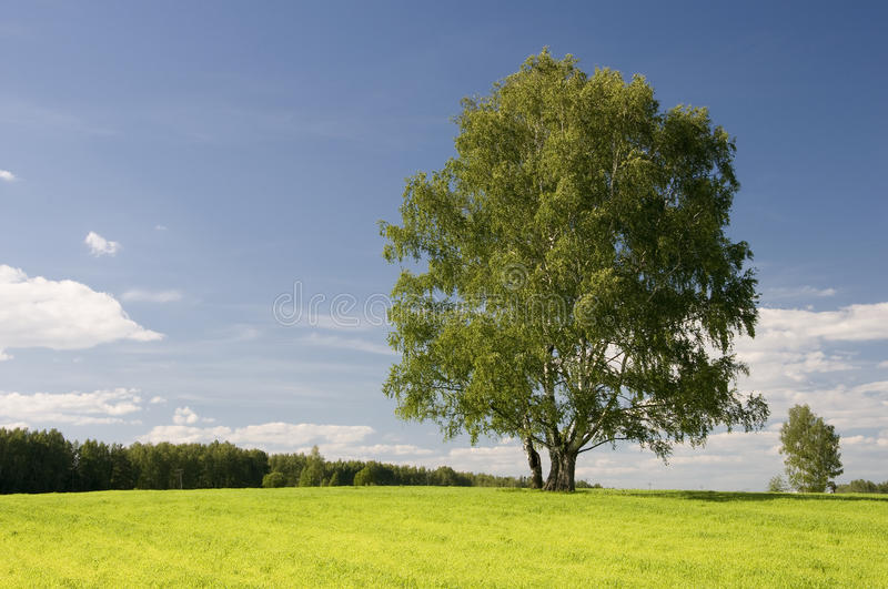 Download Wonderful Autumn Sun And Meadow Royalty Free Stock Image - Image: 15780666